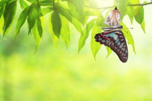 Befriending Uncertainty Benefiting from Change Roger Teel Workshop